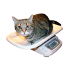 Cat Being Weighed on an Adam MTB Animal Scale