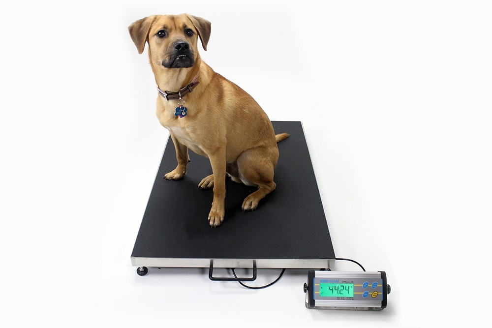 CPWplus Dog Weighing Scales